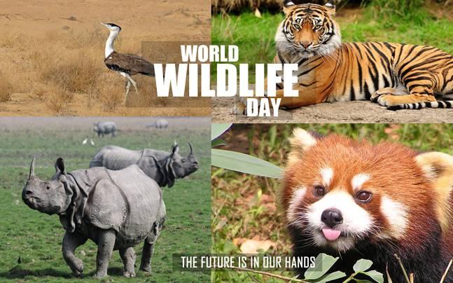 wildlife-story_647_030316120153 (1)