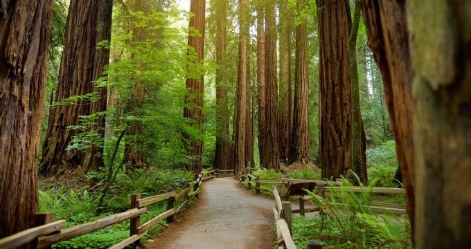 california-redwood-forests_t5__large